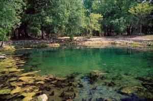 Wedding Venue in Gilchrist: Otter Springs Park & Campground, Southwest 80th Avenue, Trenton, FL