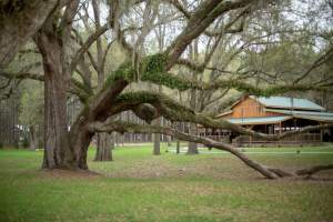 southern-pines-venue-2