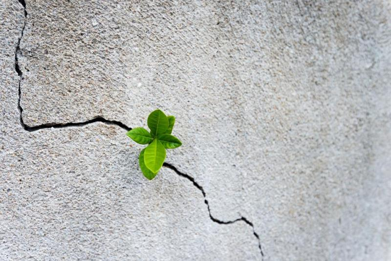 Small plant growing on concrete wall