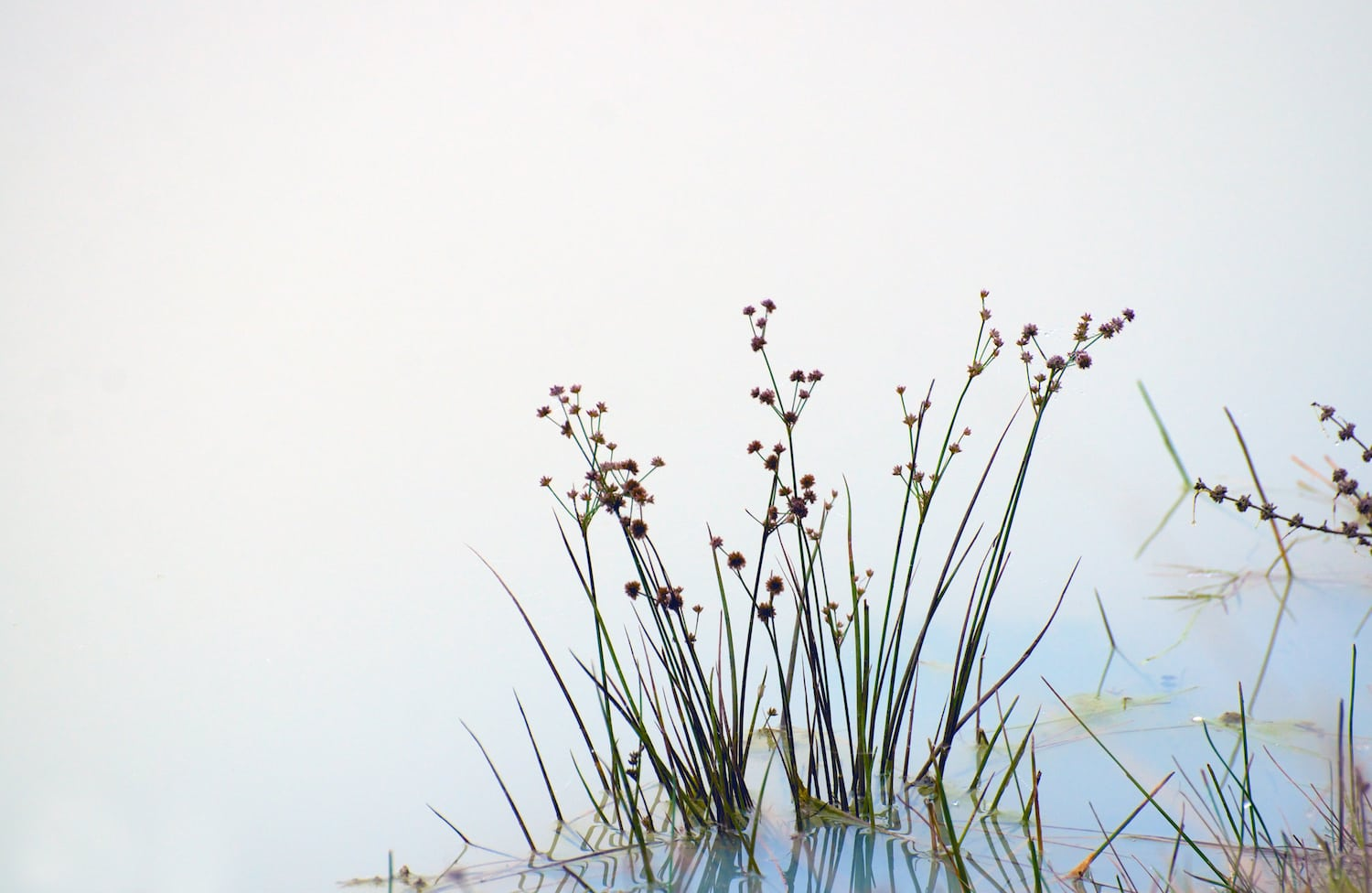 Weeds with Fog and Blue Water by Russell Tomlin, Dr. Dexter Gallery, Eugene, OR