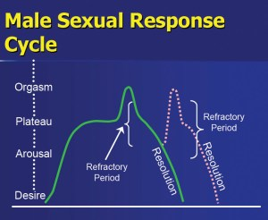 1sexual_response_cycle_male
