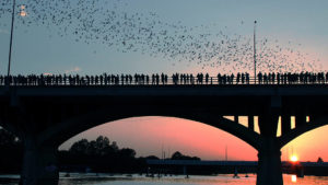 bats in trees at sunset in Austin TX. 2jpg 300x169 - SXSW 2018: 8 Offbeat Things to Do in Austin When You Aren't Seeing Movies or Bands