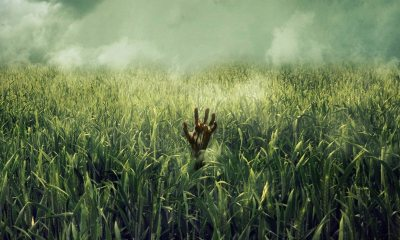 In the Tall Grass poster - Poster: Netflix's Adaptation of Stephen King and Joe Hill's IN THE TALL GRASS
