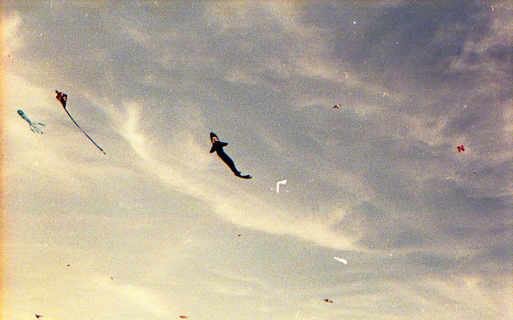 Shark Kite in the blue sky