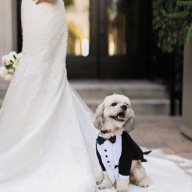 puppylove weddingdogs firstlovedog
