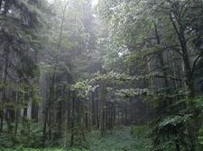 Regen Wald