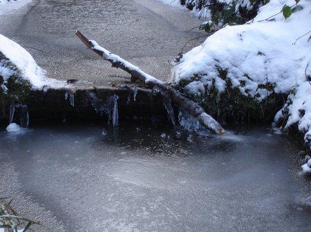 Winter2010 014