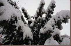 Winter2010 (20)