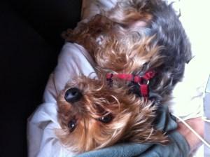 Doggy-face