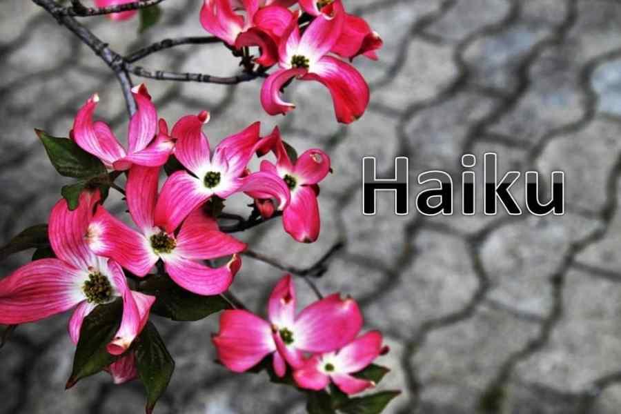Dreamers Haiku Contest