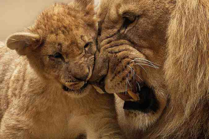small-big-lion