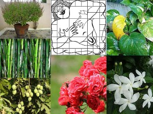 Vastu tips for plants