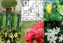 Vastu Tips for Plants and Trees