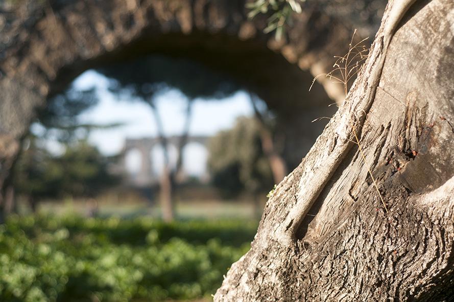 Parco degli acquedotti foto di Morgan Capasso