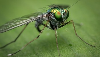 Dream Meaning of Fly - Dream Interpretation