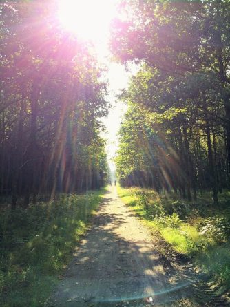 denmark trail