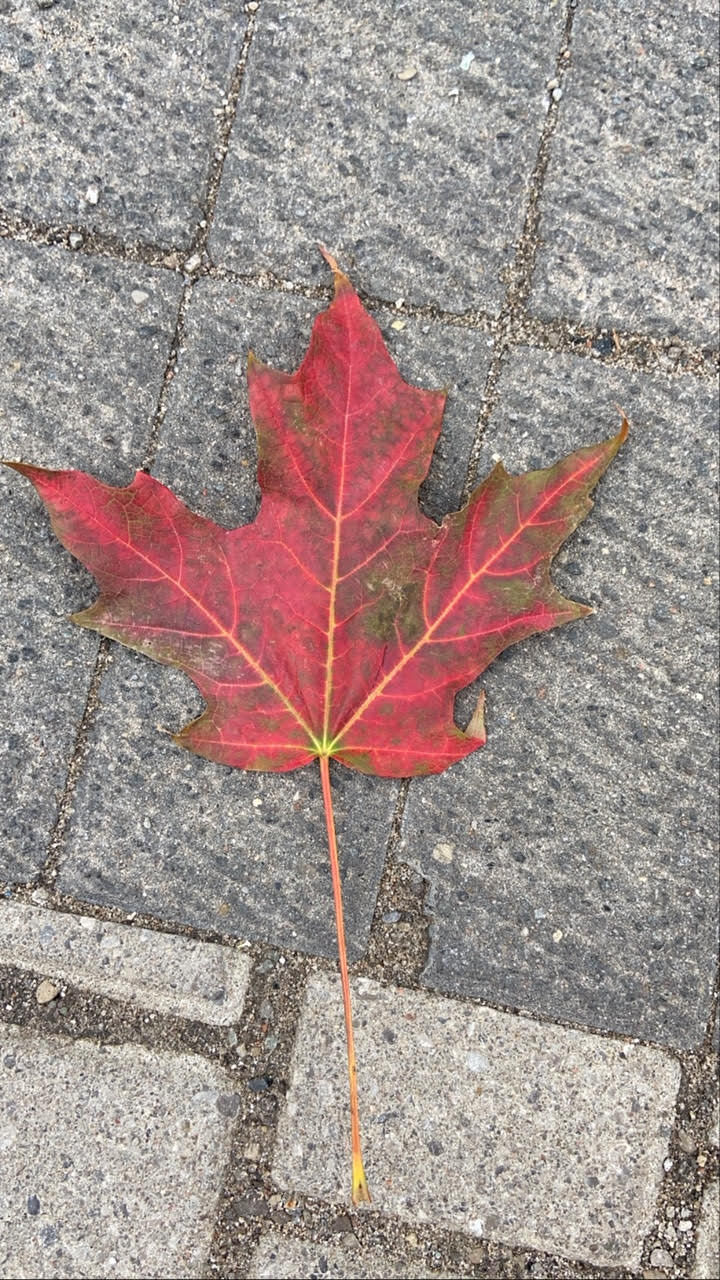A picture of a leaf that Jonathan took while working during a pandemic.