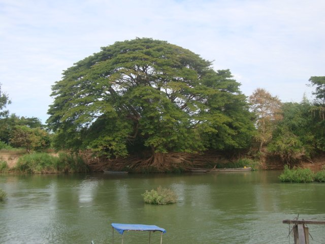 Perfectly Shaped Tree