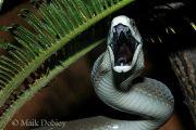 تعرف على اخطر انواع الثعابين والافاعي بالعالم وخطورة كل نوع