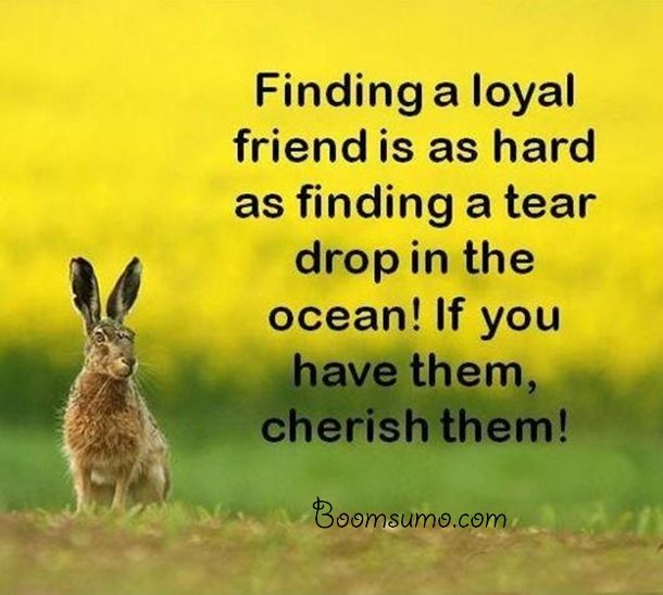 a loyal friend