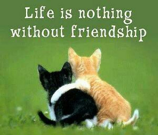 Friendship Quotes Cats: Best Friends Quotes: Life Is Nothing Without Friendship