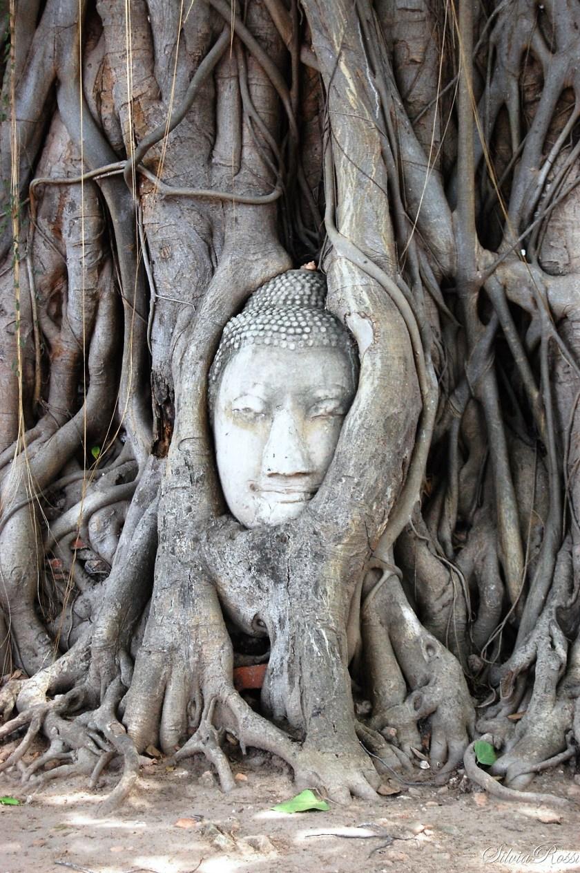 Testa del Buddha tra le radici degli alberi al Wat Phra Mahatat