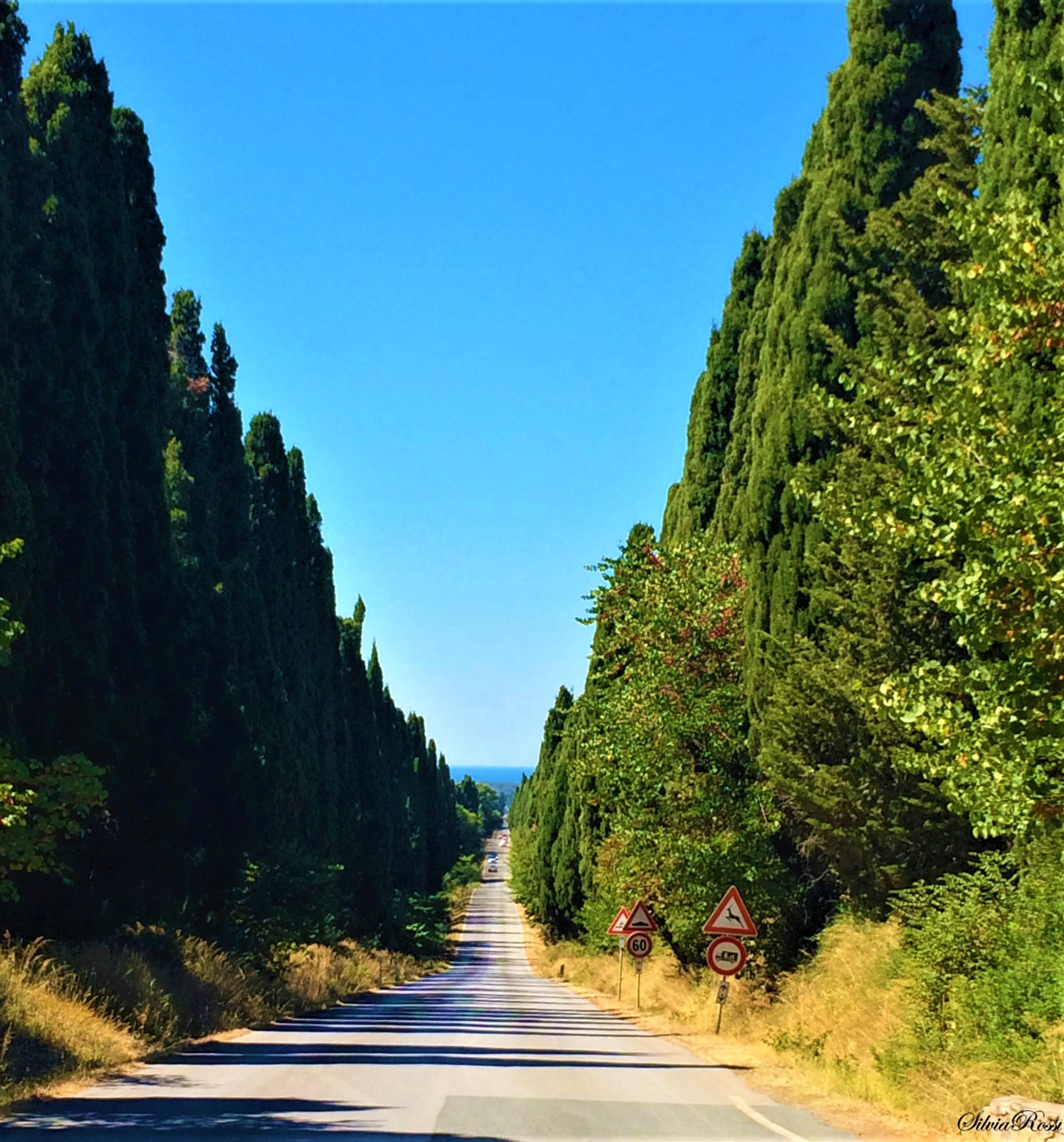 Viale dei Cipressi,