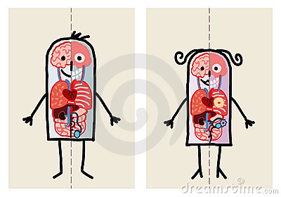 Man & Woman Anatomy Royalty Free Stock Photo