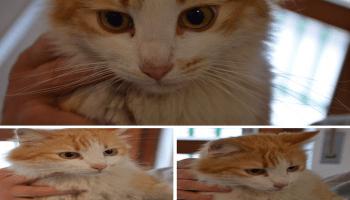 Gourmet Gold Tortini cibo per gatti