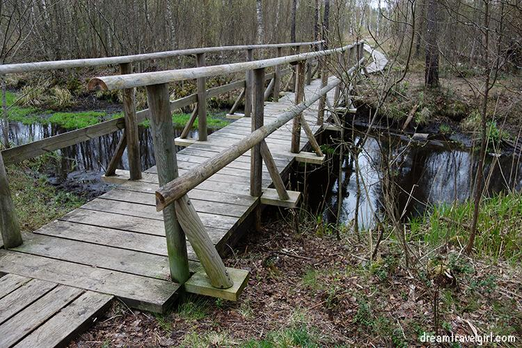 bog trail in Nõmme