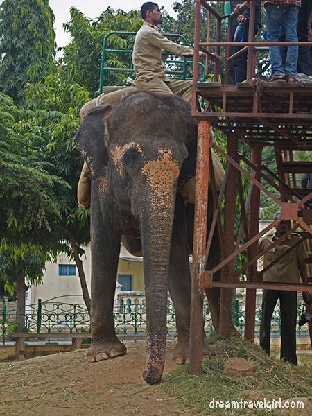 This elephant in Mysore did not look healthy, I would even say it did not look happy... it made me sad