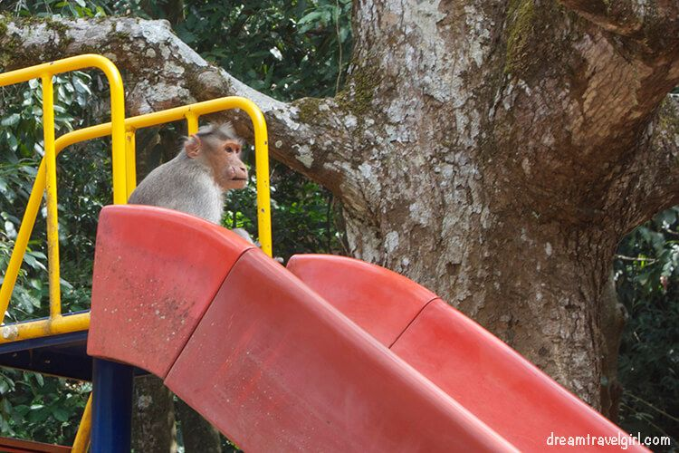 Beware of monkeys: they steal food and water and they can be anywhere (really, anywhere)