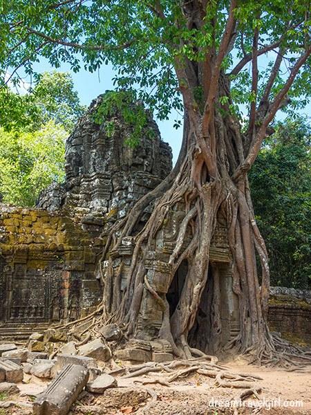 The tree in Ta Som