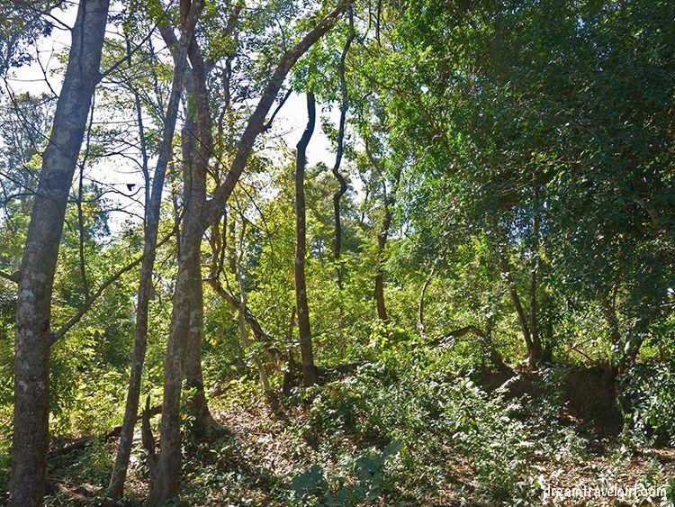 Laos_4000islands_Don-Khon_jungle