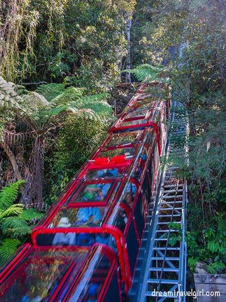The railway in the jungle