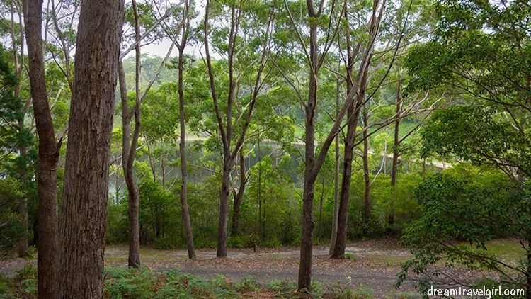 Australia_Jervis-Bay_ National-Park_forest