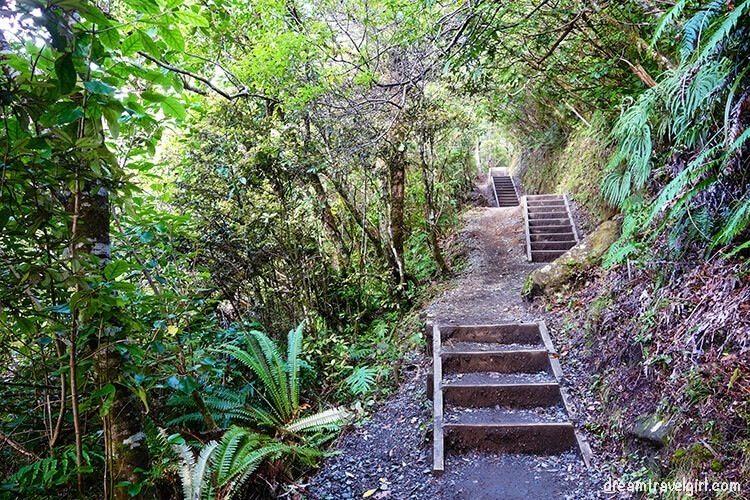 New-Zealand_Tongariro-Alpine-Crossing30-ever-green-forest