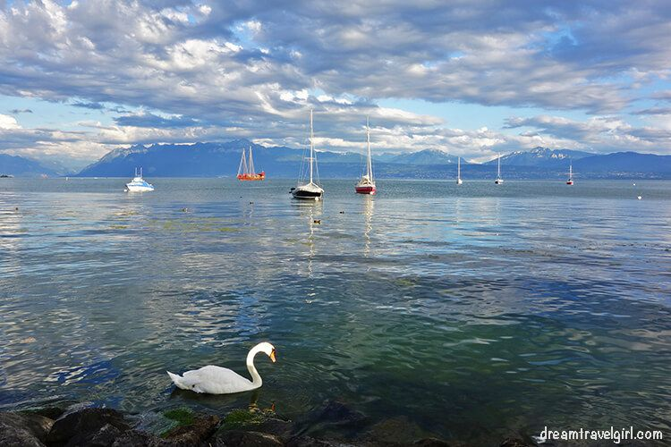 Ducks and boats on the lake Leman