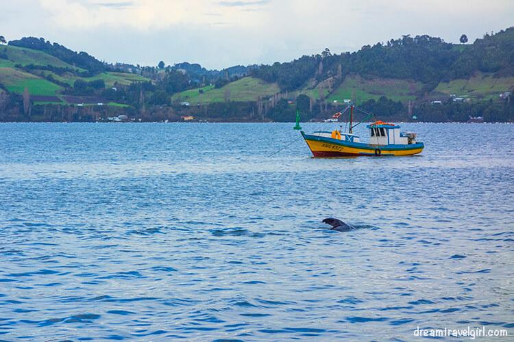 Tonina, a dolphin from the region