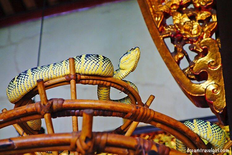 Viper at the Snake Temple, Penang, Malaysia