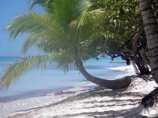 palm tree on beach Saona Island, Dominican Republic