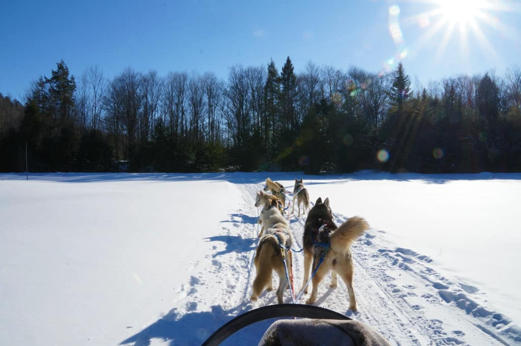 Ontario Winter Getaway with the girls-dog-sledding