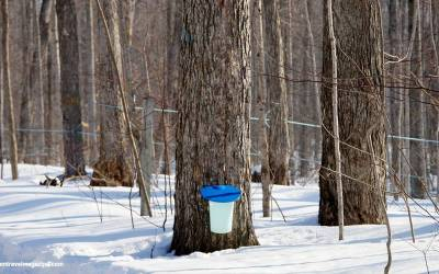 A Dream Road Trip on Ontario's Maple Syrup Trail