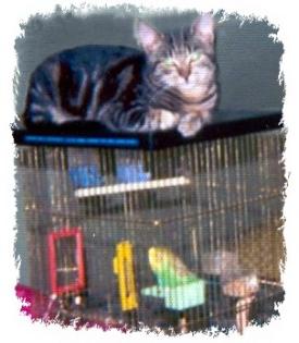 Sir Harvey atop the bird cage
