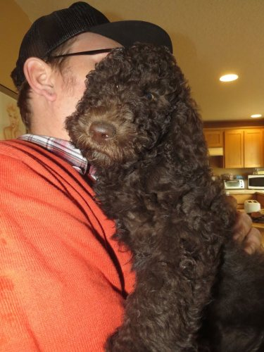 My husband Roy with Romeo -  Labradoodle puppy