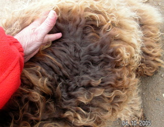 True Chocolate Fleece weathered at the tips
