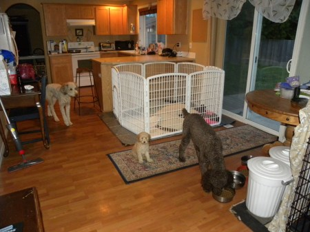 Our Home is basically set up like an indoor kennel.. it is our life.