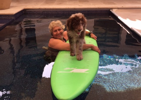 Surfing Aussiedoodle - Syd practiced with Kula in their pool.. and eventually Kula did learn to surf in the ocean!!