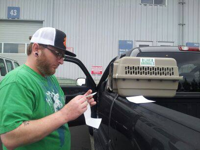 My husband putting the stickers on the crate