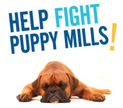 Facts about Puppy Mills – How to Stop them!- Aussiedoodle